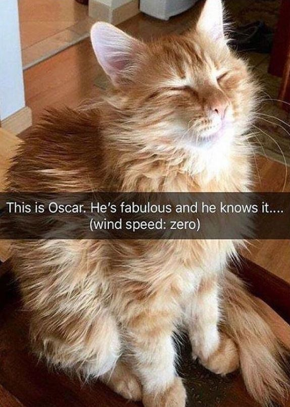 Cat - This is Oscar. He's fabulous and he knows it.... (wind speed: zero)