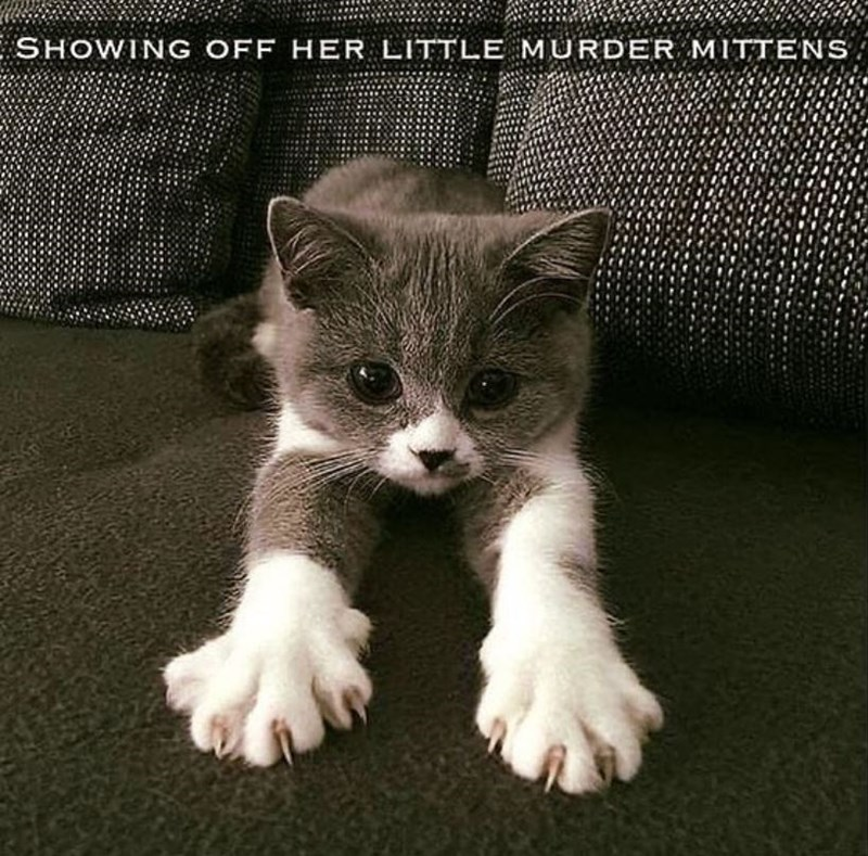 Cat - SHOWING OFF HER LITTLE MURDER MITTENS