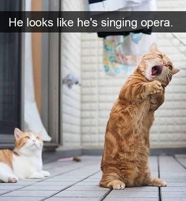 Cat - He looks like he's singing opera.