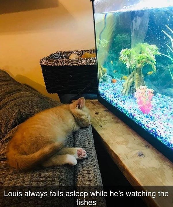 Organism - Louis always falls asleep while he's watching the fishes