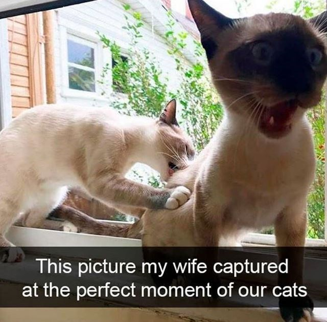 Cat - This picture my wife captured at the perfect moment of our cats