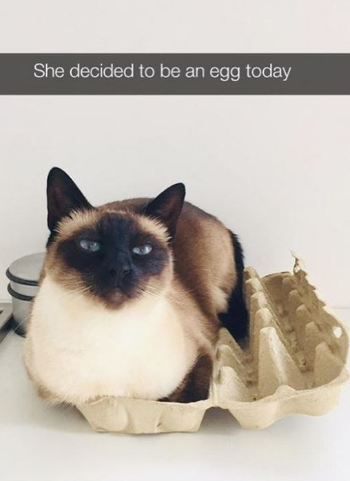 Cat - She decided to be an egg today
