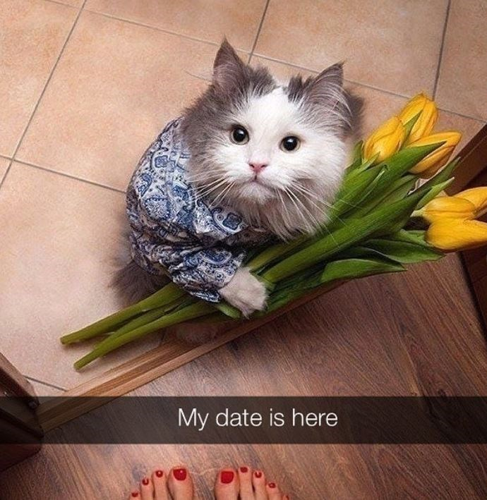 Cat - My date is here