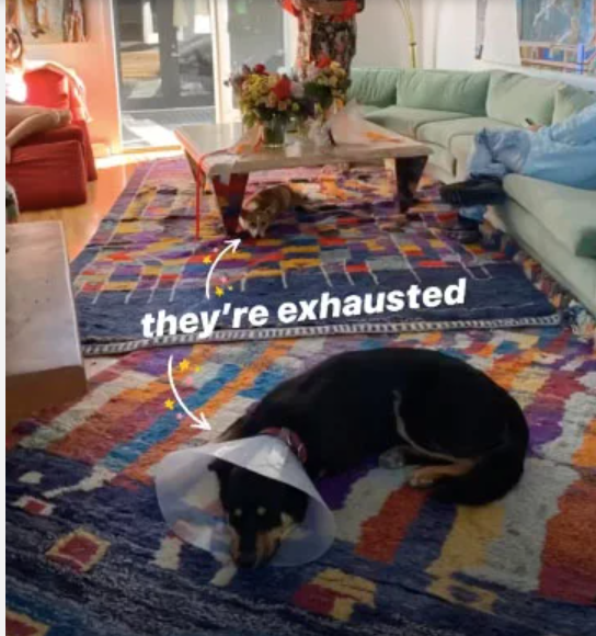 Room - they're exhausted