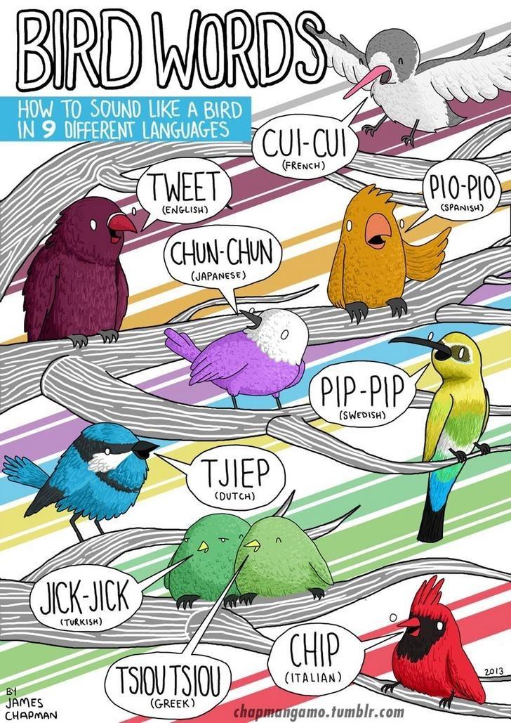 Cartoon - BIRD WORDS HOW TO SOUND LIKE A BIRD IN 9 DIFFERENT LANGUAGES CUI-CUI (FRENCH) TWEET PIO-PIO (ENGLISH) (SPANISH) (CHUN-CHUN (JAPANESE) PIP-PIP (HSI03MS) TJIEP (DUTCH) JICK-JICK (TURKISH) CHIP TSIOU TSIOU 2013 (ITALIAN) B4 JAMES CHAPMAN (GREEK) chapmangamo.tumblr.com