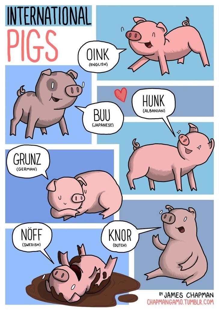 Cartoon - INTERNATIONAL PIGS OINK (ENGLISH) HUNK (ALBANIAN) BUU (JAPANESE) GRUNZ (GERMAN) NÖF KNOR (SWEDISH) (DUTCH) BY JAMES CHAPMAN CHAPMANGAMO. TUMBLR.COM