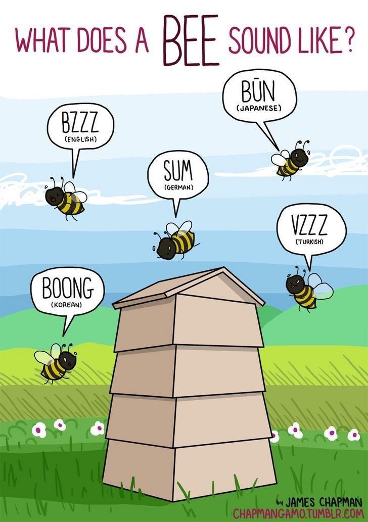 Cartoon - WHAT DOES A BEE SOUND LIKE? BŪN (JAPANESE) BZZZ (ENGLISH) SUM (GERMAN) VZZZ (TURKISH) BOONG (KOREAN) by JAMES CHAPMAN | CHAPMANGAMO.TUMBLR.COM