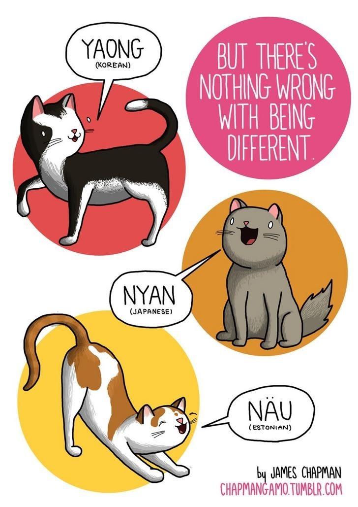 Cartoon - YAONG BUT THERE'S NOTHING WRONG WITH BEING DIFFERENT. (KOREAN) NYAN (JAPANESE) NÂU (ESTONIAN) by JAMES CHAPMAN CHAPMANGAMO.TUMBLR.COM