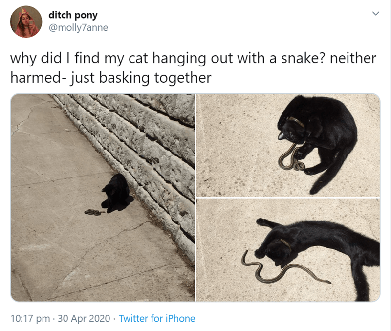 Black cat - ditch pony @molly7anne why did I find my cat hanging out with a snake? neither harmed- just basking together 10:17 pm · 30 Apr 2020 · Twitter for iPhone