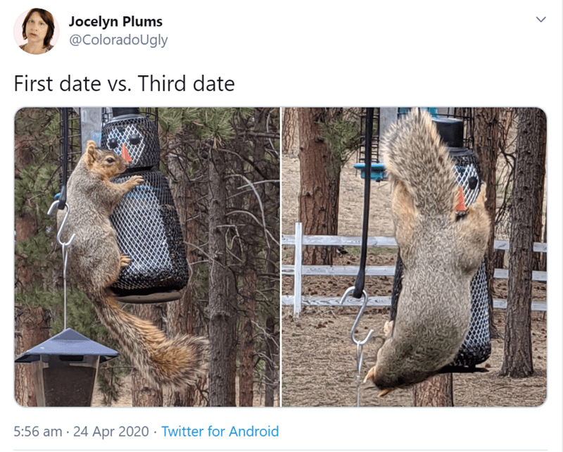 Wildlife - Jocelyn Plums @ColoradoUgly First date vs. Third date 5:56 am · 24 Apr 2020 · Twitter for Android