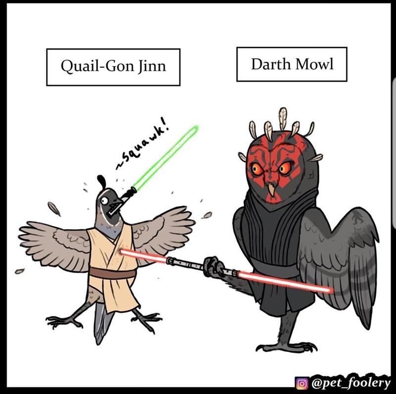 Cartoon - Quail-Gon Jinn Darth Mowl asquawk! O @pet_foolery