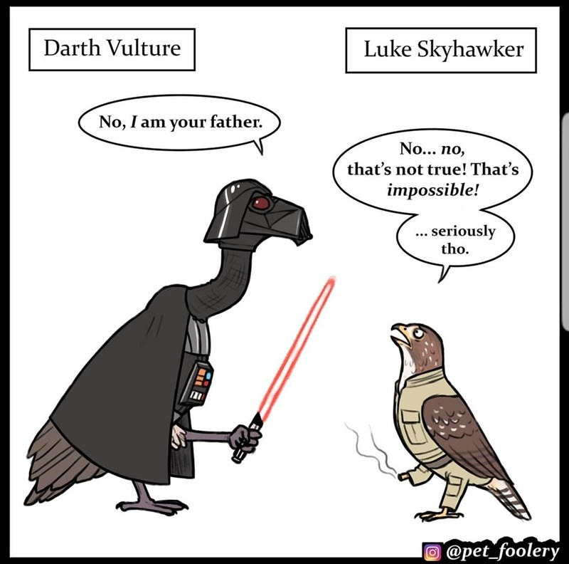 Cartoon - Darth Vulture Luke Skyhawker No, I am your father. No... no, that's not true! That's impossible! ... seriously tho. O @pet_foolery