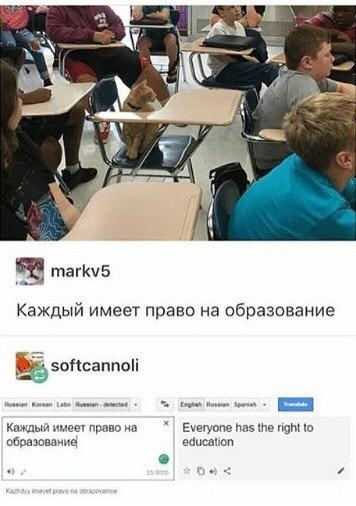 cat memes - 9479895552