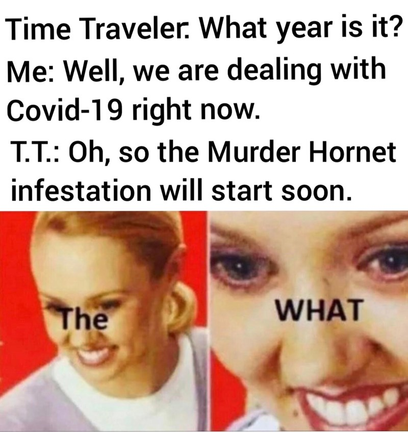 Face - Time Traveler. What year is it? Me: Well, we are dealing with Covid-19 right now. T.T.: Oh, so the Murder Hornet infestation will start soon. The WHAT
