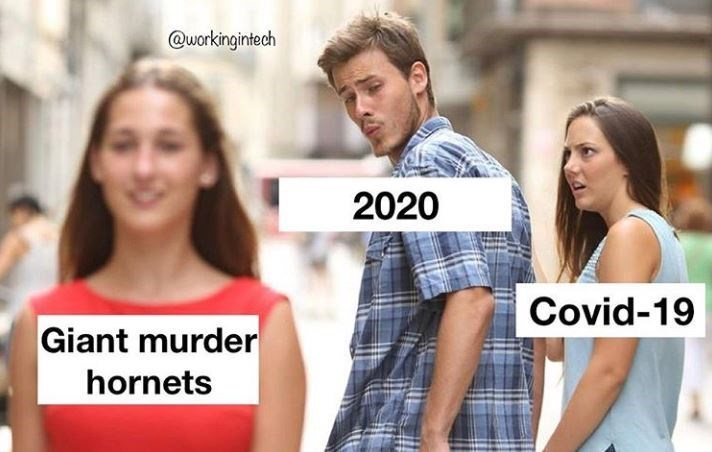 People - @workingintech 2020 Covid-19 Giant murder hornets