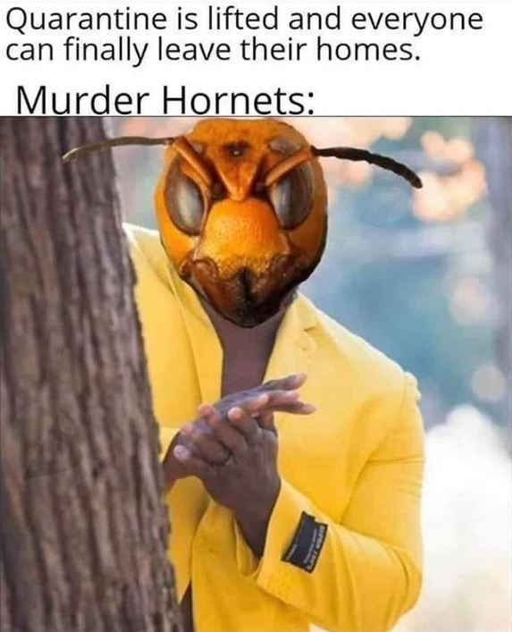 Honeybee - Quarantine is lifted and everyone can finally leave their homes. Murder Hornets: