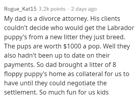 Text - Rogue_Kat15 3.2k points · 2 days ago My dad is a divorce attorney. His clients couldn't decide who would get the Labrador puppy's from a new litter they just breed. The pups are worth $1000 a pop. Well they also hadn't been up to date on their payments. So dad brought a litter of 8 floppy puppy's home as collateral for us to have until they could negotiate the settlement. So much fun for us kids