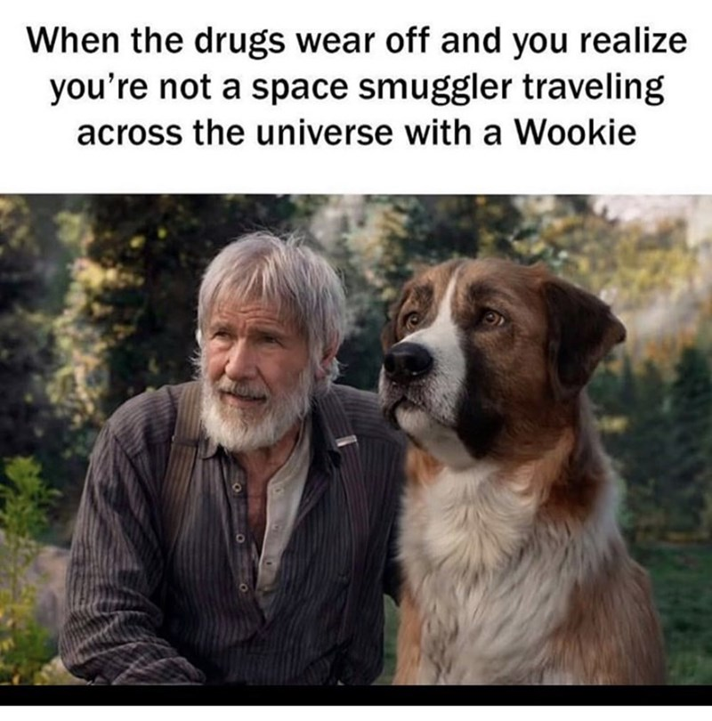 Dog - When the drugs wear off and you realize you're not a space smuggler traveling across the universe with a Wookie