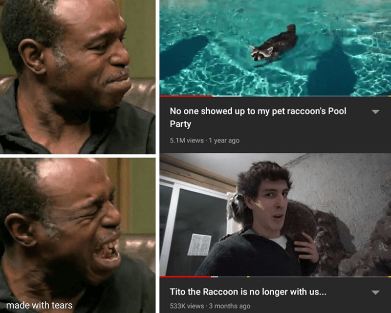 Funny meme and sad meme about tito the raccoon dying | NO one showed up to my pet raccoon's Pool Party | Tito the Raccoon is no longer with us... made with tears