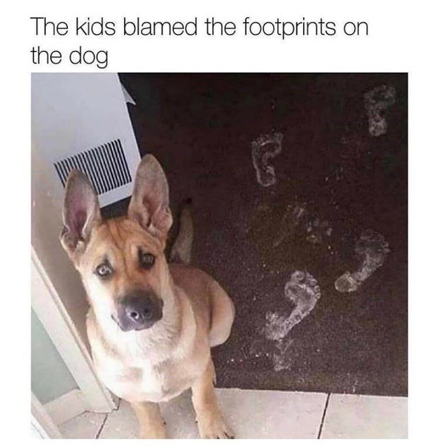 Dog - The kids blamed the footprints on the dog