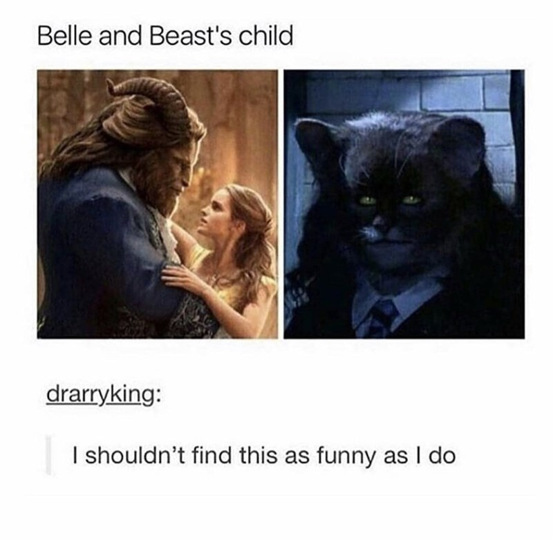 Cat - Belle and Beast's child drarryking: I shouldn't find this as funny as I do
