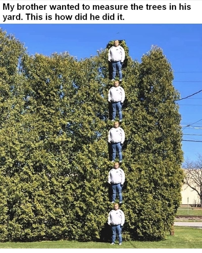 Tree - My brother wanted to measure the trees in his yard. This is how did he did it.