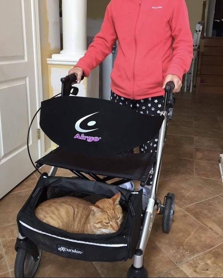 Baby carriage - Airgo eXcursion
