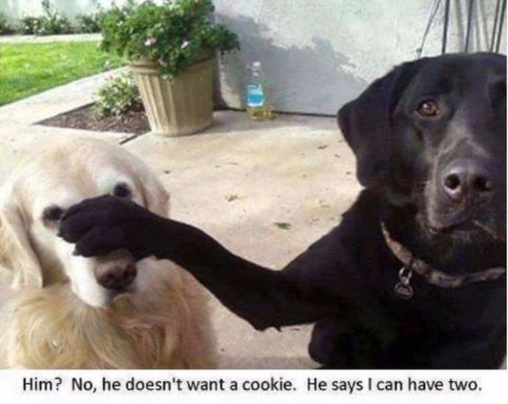 Vertebrate - Him? No, he doesn't want a cookie. He says I can have two.