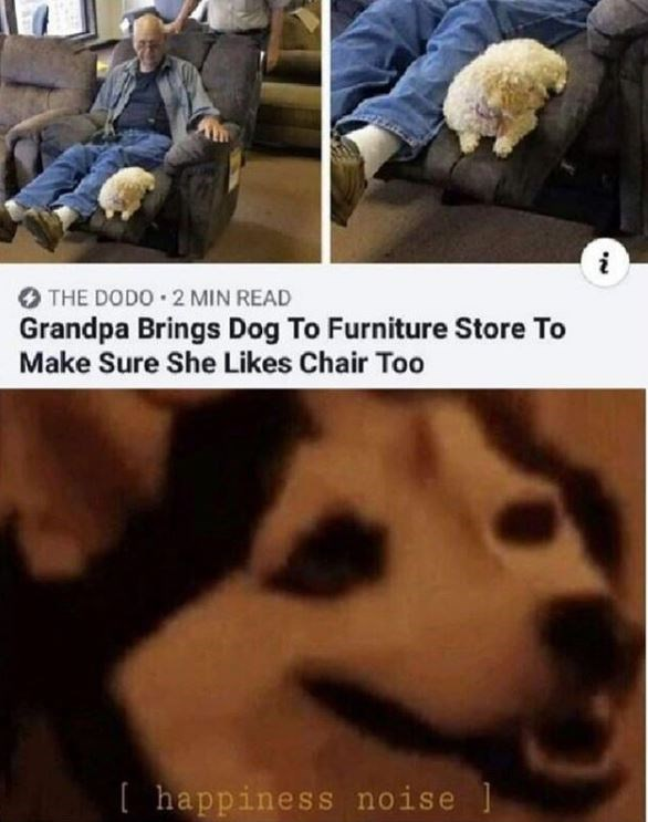 Canidae - THE DODO 2 MIN READ Grandpa Brings Dog To Furniture Store To Make Sure She Likes Chair Too [ happiness noise ]