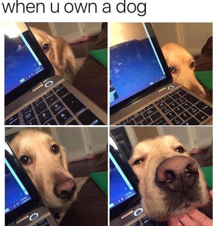 Nose - when u own a dog 8. PGUP TER 2. IND TUNO
