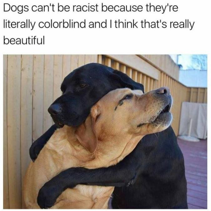 Dog - Dogs can't be racist because they're literally colorblind and I think that's really beautiful