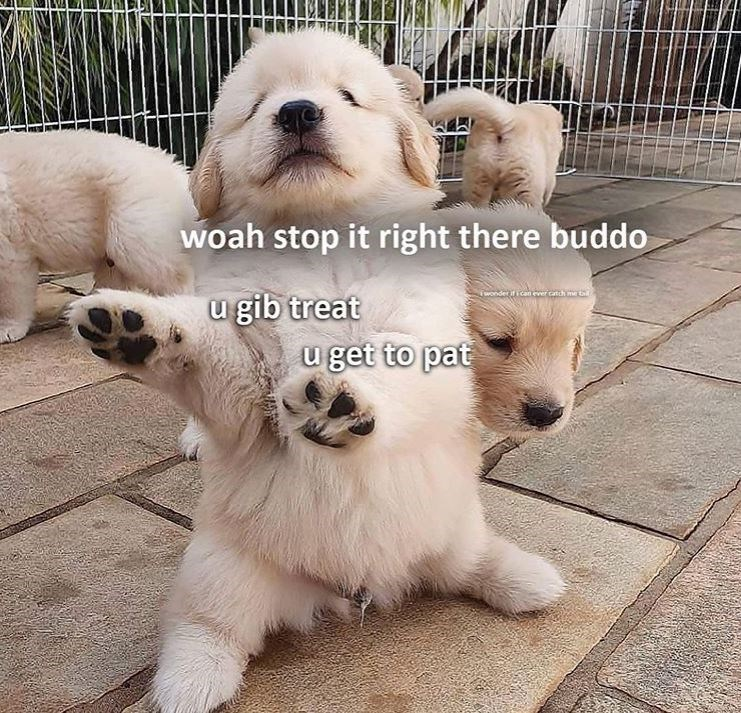 Dog - woah stop it right there buddo wonder ican er catch me u gib treat u get to pat