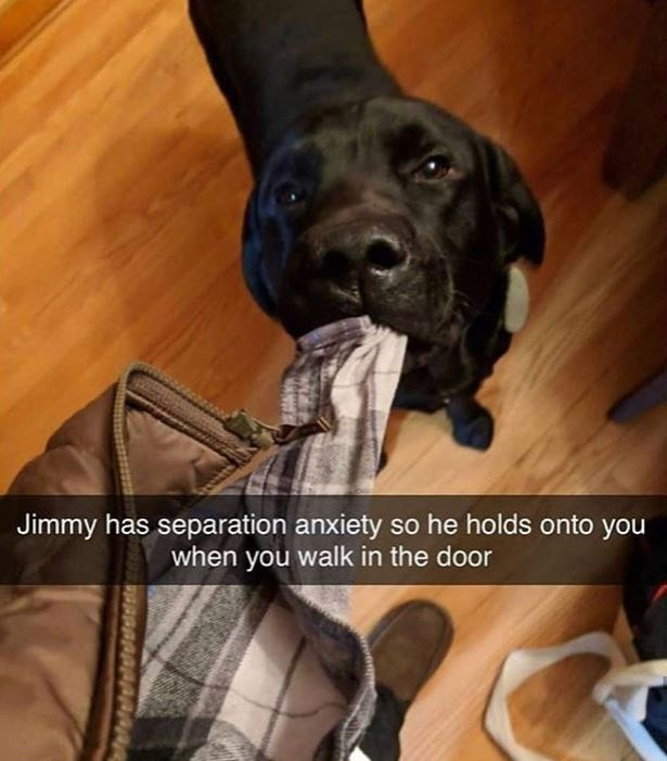 Dog breed - Jimmy has separation anxiety so he holds onto you when you walk in the door