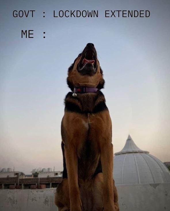Dog - GOVT : LOCKDOWN EXTENDED ME :