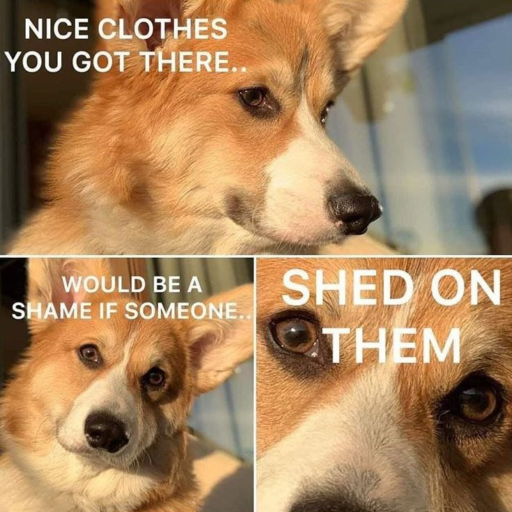 Dog - NICE CLOTHES YOU GOT THERE.. SHED ON THEM WOULD BE A SHAME IF SOMEONE..