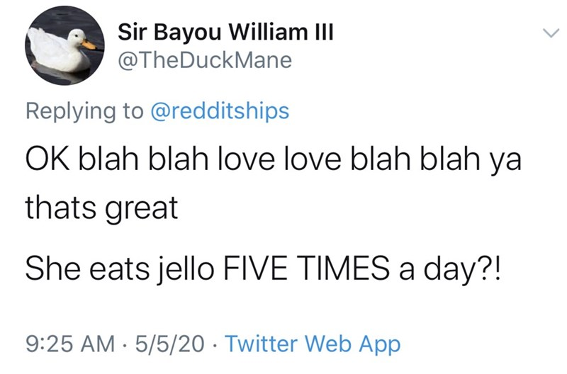 Text - Sir Bayou William III @TheDuckMane Replying to @redditships OK blah blah love love blah blah ya thats great She eats jello FIVE TIMES a day?! 9:25 AM · 5/5/20 · Twitter Web App