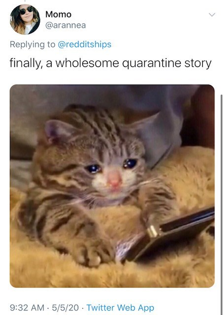 Cat - Momo @arannea Replying to @redditships finally, a wholesome quarantine story 9:32 AM - 5/5/20 · Twitter Web App