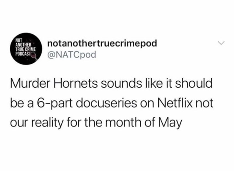 Text - NOT ANOTHER TRUE CRIME PODCAST notanothertruecrimepod @NATCpod Murder Hornets sounds like it should be a 6-part docuseries on Netflix not our reality for the month of May