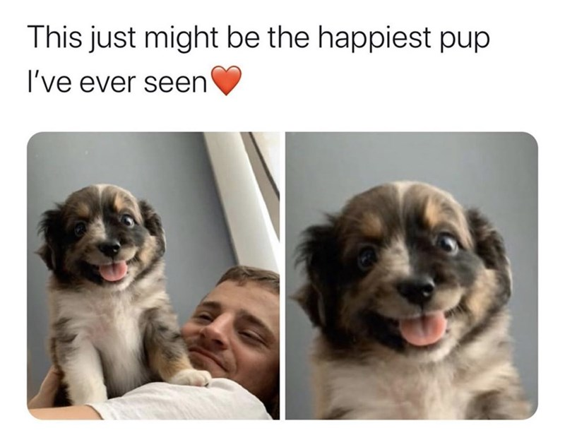 Dog breed - This just might be the happiest pup I've ever seen