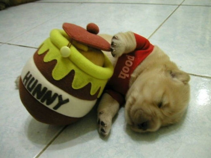 halloween costumes dogs cute