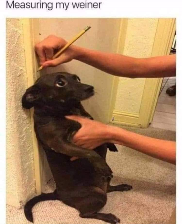 Dog - Measuring my weiner