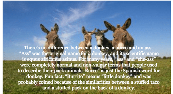 """Nature - There's no difference between a donkey, a burro and an ass. """"Ass"""" was the original name for a donkey, and its scientific name is equus africanus asinus. For many years, Fass and """"she-ass"""" were completely normal and non-vulgar terms that people used to describe their pack animals. Burro"""" is just the Spanish word for donkey. Fun fact: """"Burrito"""" means """"little donkey"""" and was probably coined because of the similarities between a stuffed taco and a stuffed pack on the back of a donkey."""