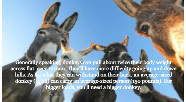 Vertebrate - Generally speaking, donkeys can pull about twice their body weight across flat, even terrain. They'll have more difficulty going up and down hills. As for what they can withstand on their back, an average-sized donkey (1 hh) can carry an average-sized person (150 pounds). For bigger loads, you'll need a bigger donkey.