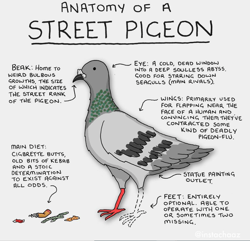 Bird - ANATOMY OF A STREET PIGEON EYE: A COLD, DEAD WINDOW INTO A DEEP SOULLE SS ABYSS. ÇOOD FOR STARING DOWWN SEAGULLS (mAIN RIVALS). BEAK: Home TO WEIRD BULBOUS GROWTHS, THE SIZE OF WHICH INDICATES THE STREET RANK OF THE PIGEON. WINGS: PRIMARILY USED FOR FLAPPING NEAR THE FACE OF A HUMAN AND CONVINCING THEM THEYVE CONTRACTED SOME KIND OF DEADLY PIGEON-FLU. MAIN DIET: CIGBRETTE BUTTS, OLD BITS OF KEBAB AND A STOIC DETERMINATION TO EXIST AGAINST ALL ODDS. STATUE PAINTING OUTLET. 2. FEET: ENTIREL