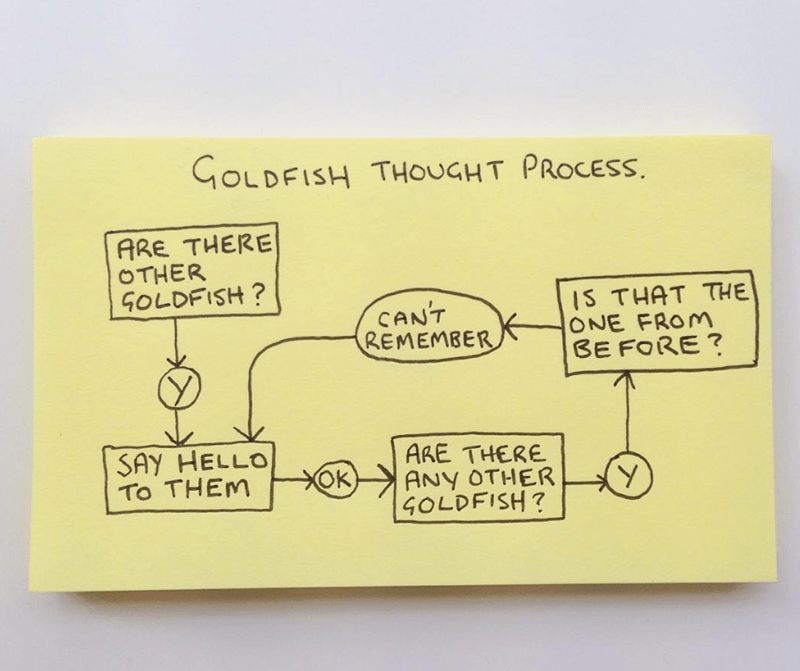 Text - GOLDFISH THOUGHT PROCESS. ARE THERE OTHER GOLDFISH? CAN'T REMEMBER IS THAT THE ONE FROM BE FORE ? SAY HELLO TO THEM ARE THERE ANY OTHER GOLDFISH? OK