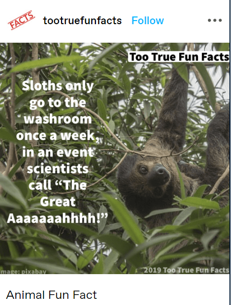"""Terrestrial animal - tootruefunfacts Follow FACTS Too True Fun Facts Sloths only go to the washroom once a week, in an event scientists call """"The Great Aaaaaaahhhh!"""" mage: pixabay 2019 Too True Fun Facts Animal Fun Fact"""