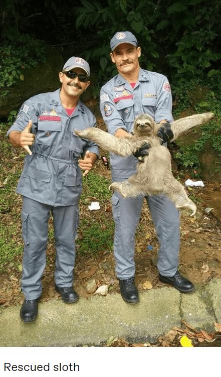Wildlife biologist - Rescued sloth