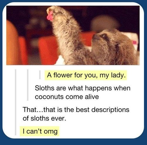 Adaptation - A flower for you, my lady. Sloths are what happens when coconuts come alive That...that is the best descriptions of sloths ever. I can't omg