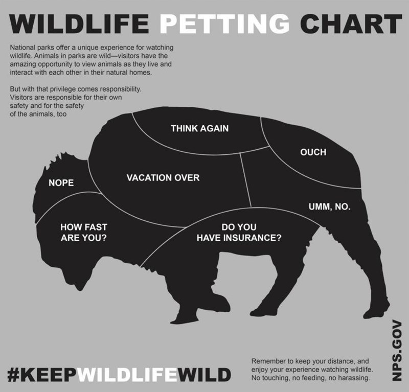 wildlife petting chart bison National parks a unique watching wildlife. Animals in parks are have amazing to view animals as Remember to keep your distance.