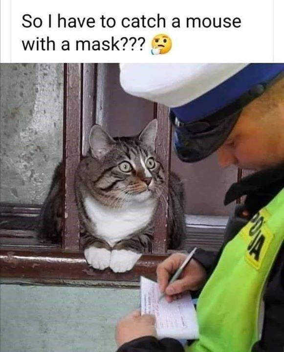 So I have to catch a mouse with a mask??? police officer writing a ticket to a cat nearby